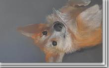 Anfiova E. / Animal characters