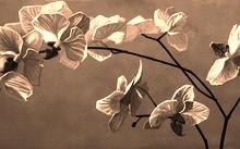 Селиванов В. / Орхидея / дерево / масло / 2008